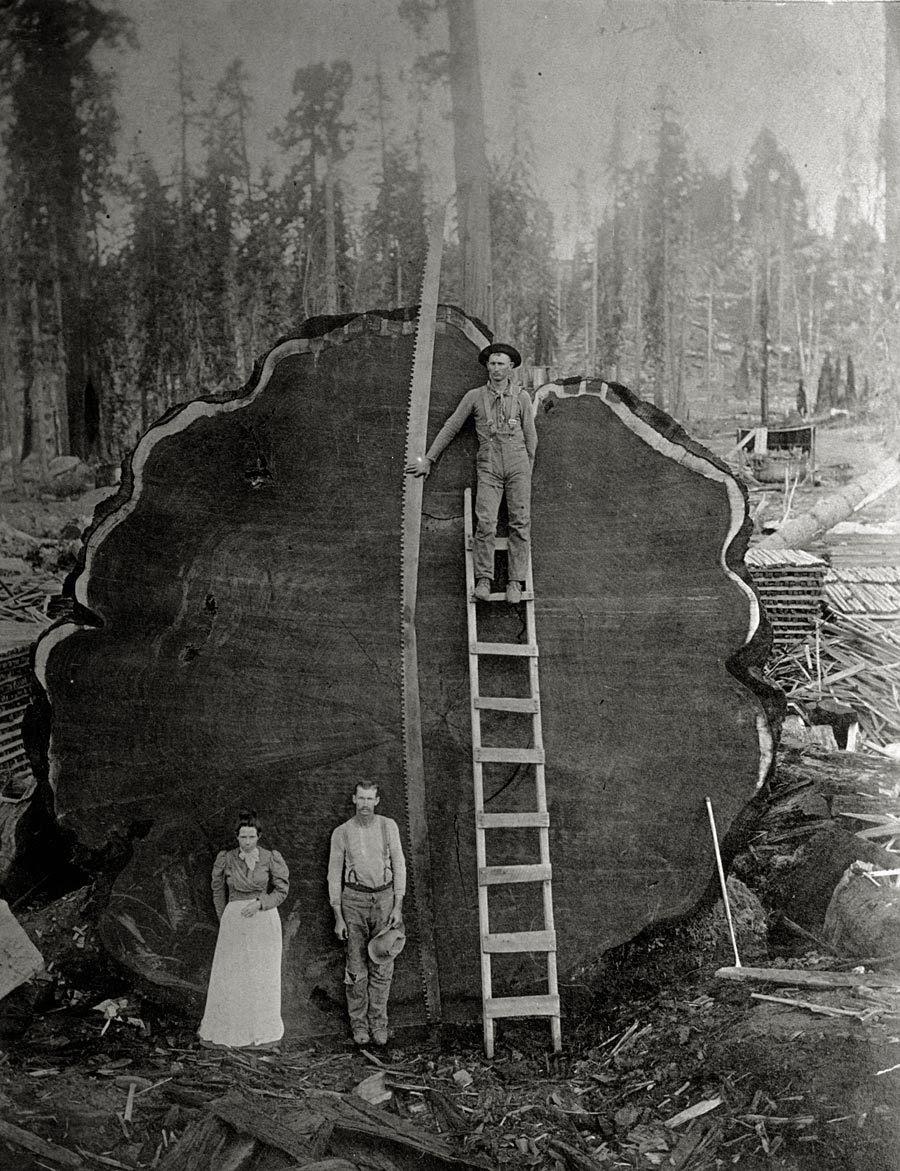 Registradores y el gigante de Mark Twain secoya cortados en California, 1892.  Esta foto ya otros de los archivos de National Geographic están siendo subastadas por Christie en una exclusiva línea de sólo venta, desde 19 hasta 29 julio, ven aquí para detailsPhotograph por NE Beckwith