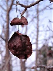 Winter leaves