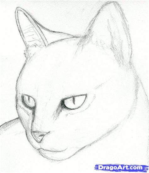 cat drawings pencil   draw  cat head draw