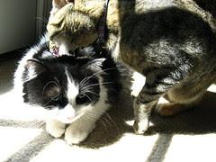 "Josie ""sunbathing"" with Maggie"