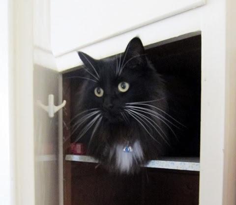 cat-in-cupboard