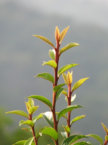 A plant atop a knoll which is about a mile away from the Great Buddha statue.....