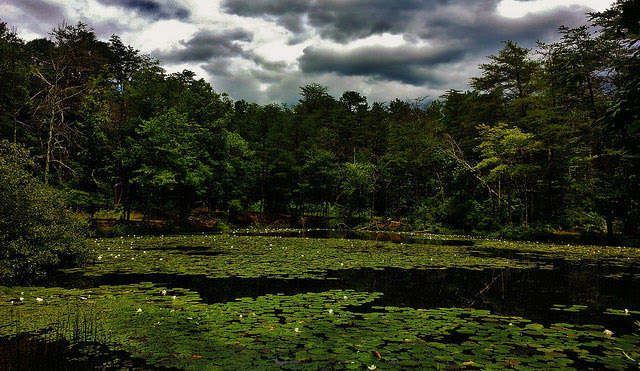 -- Rieve's Pond on the         North Tract of the Patuxent Research Refuge near Fort Meade,         Maryland --