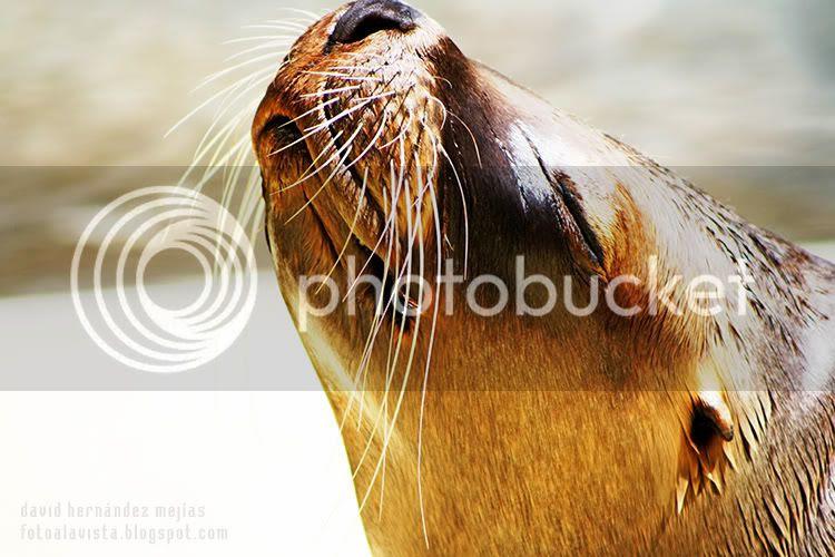 Primer plano de la cabeza de un león marino tomando el sol en el zoo de Madrid