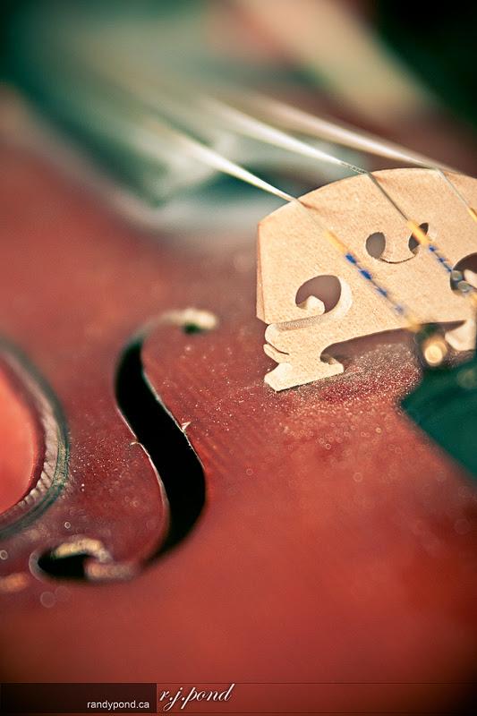 ~ Fiddle 106/365 ~