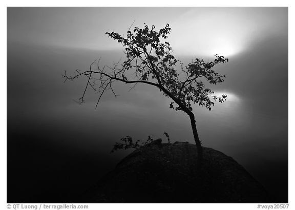 Black And White Picturephoto Sun Tree And Fog Kabetogama Lake
