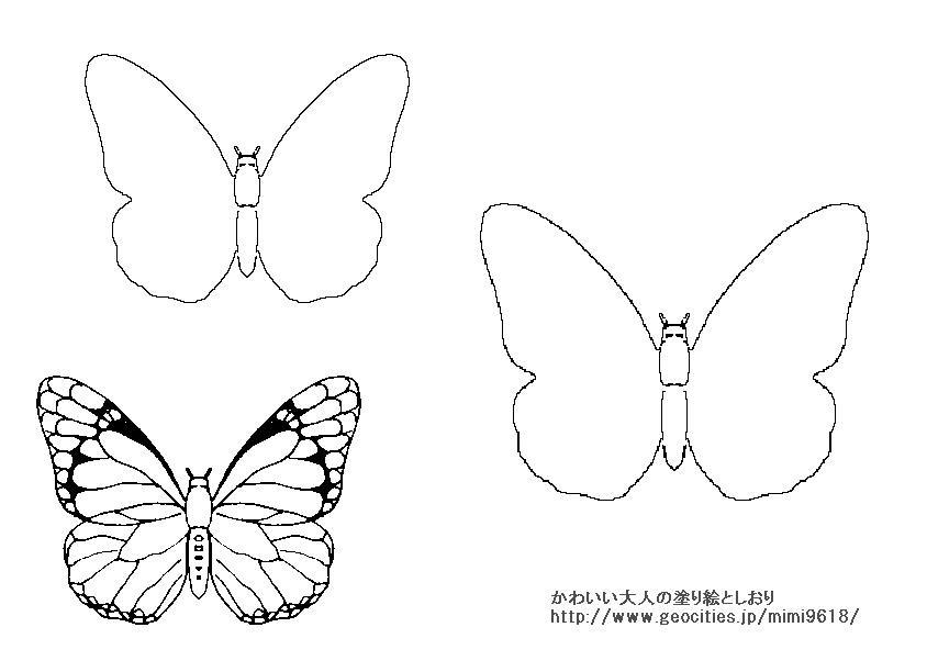 デザイナー塗り絵蝶 かわいそうだから見て人気が無かった塗り絵