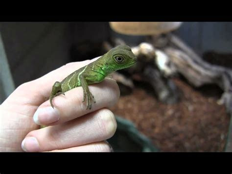 exotic pets 101 on emaze