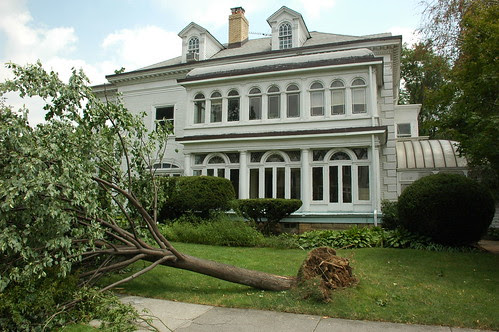 Trees downed by tornado, 1510 Albemarle Road, Prospect Park South