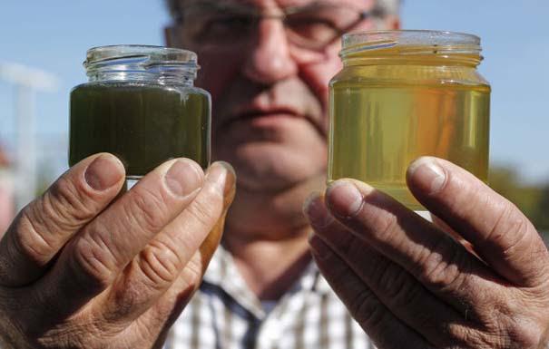 Μέλισσες παράγουν χρωματιστό μέλι (4)