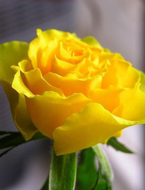 Beautiful flowers collections yellow makes me happy Flowers that make you happy
