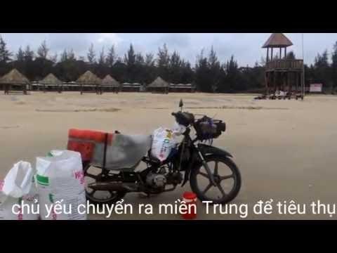 Nghề cào nhằn nhằn ở biển Hồ Cốc (Xuyên Mộc - BR-VT)