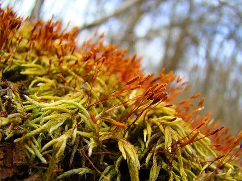 Moss thingies