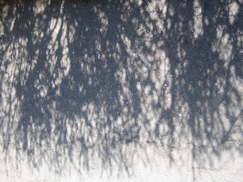 Shadow _ 8882