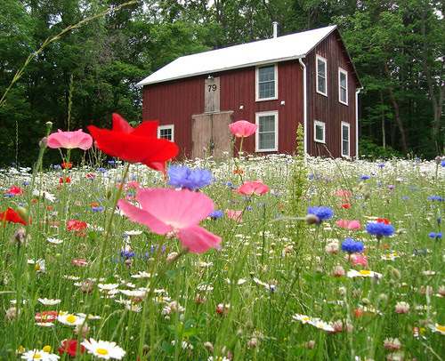 the meadow that keeps blossoming