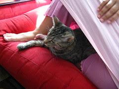 Maggie's makeshift tent