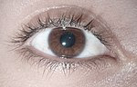 Brown eye.jpg