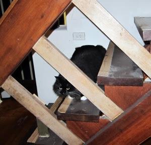 stairs-cat2