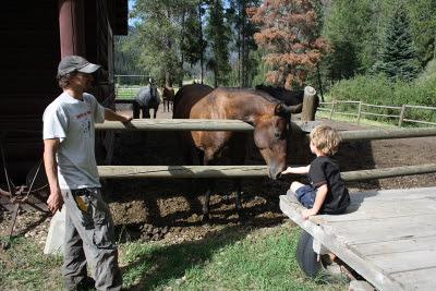 Horses near Big Creek