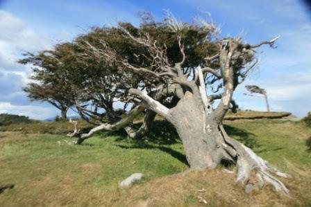 http://losviajesdefranna.files.wordpress.com/2010/12/viento-patagonico.jpg?w=448&h=299