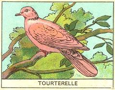 oiseaux mart 5