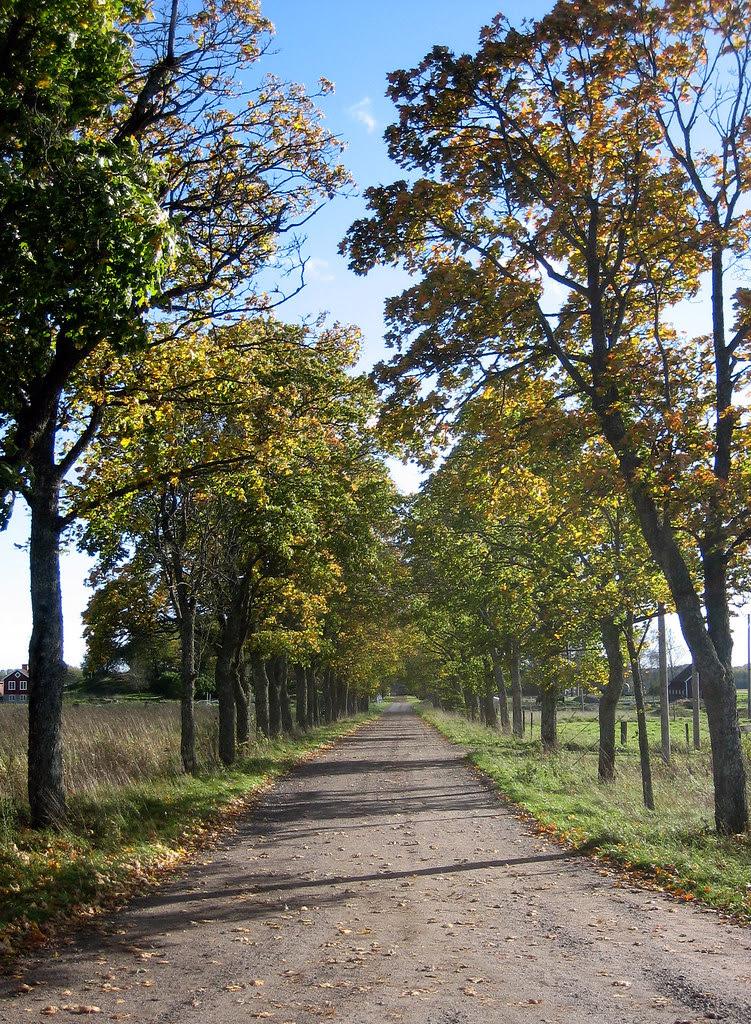 Autumn Boulevard 2006