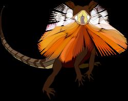 Frill-necked lizard (dragon) by worms_x - Frill-necked lizard aka Frilled dragon typical to Australia