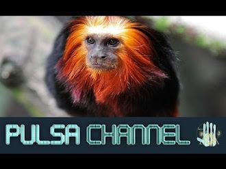 TOP 10 Animales que se Salvaron del Borde de la Extinción