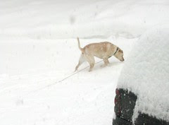 Zeus_snow11809c