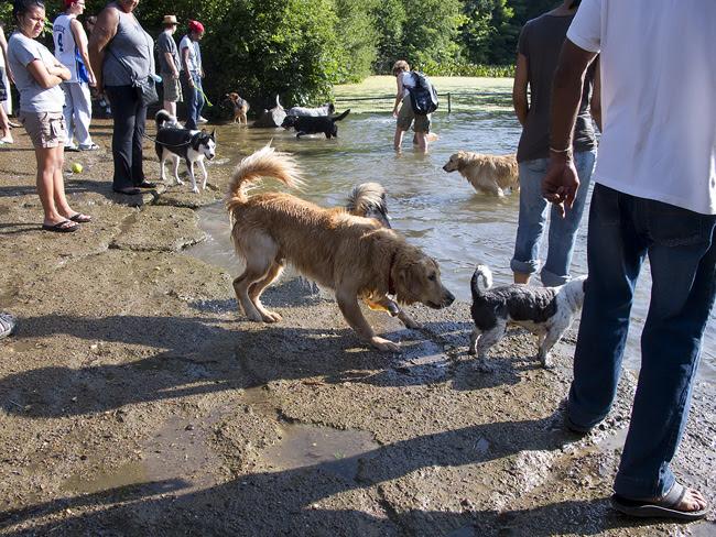 At the Dog Pond, Prospect Park