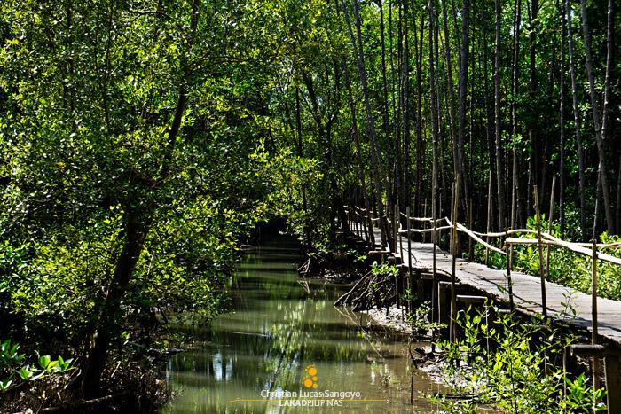 Elevated Pathway at Kalibo's Bakhawan Eco Park
