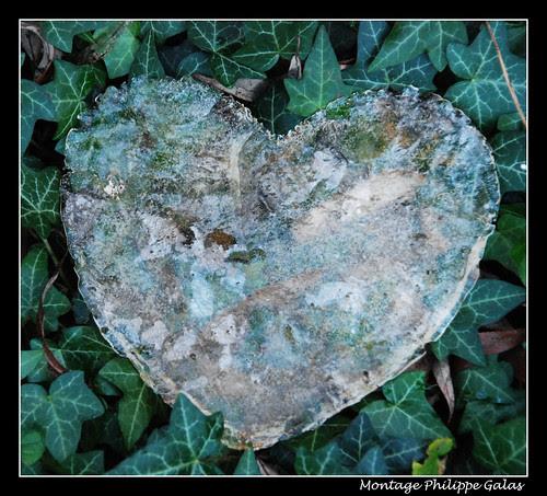 Coeur de glace
