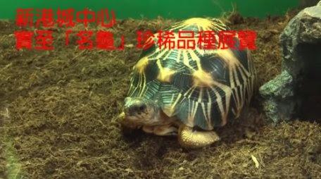 從珍稀物種展覽看香港的保育政策
