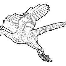Dibujos Para Colorear Arqueopterix Volador Eshellokidscom