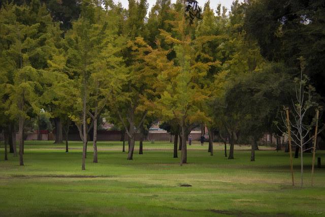 Furman Park trees