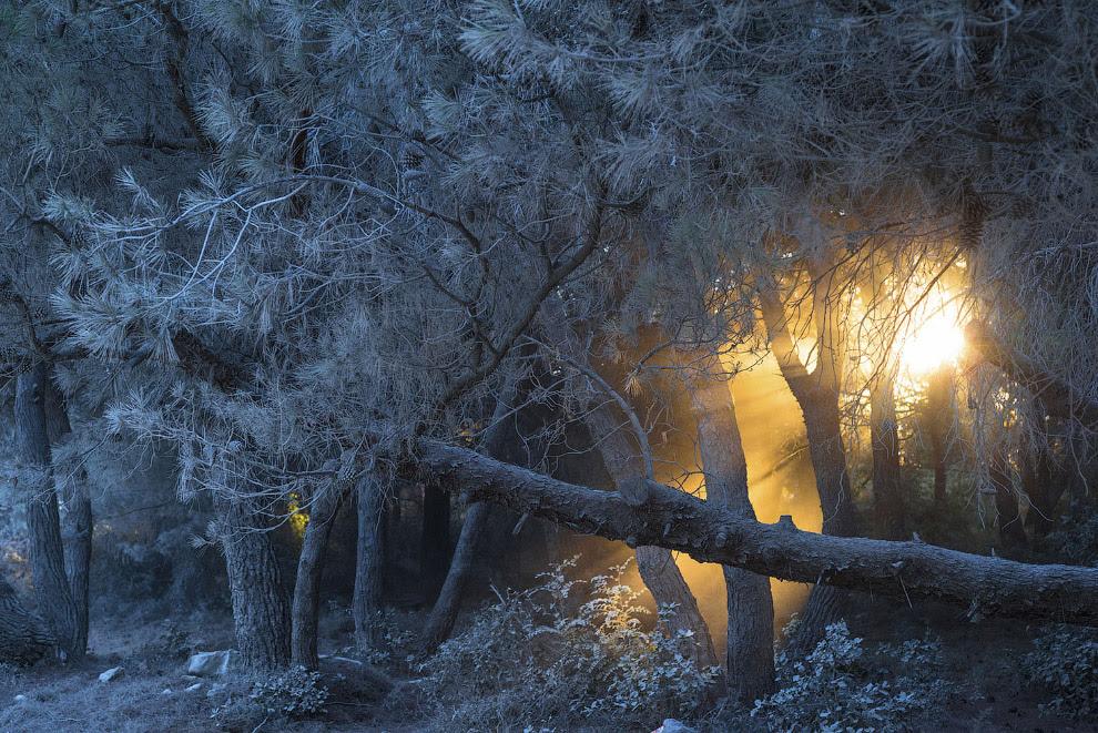 Огонь в Белом лесу
