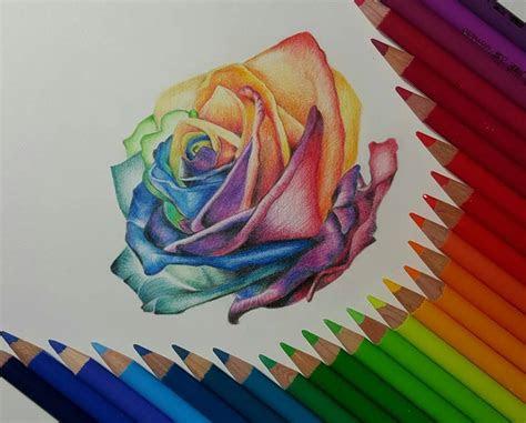 rose color pencil drawing  gaby sabbagh