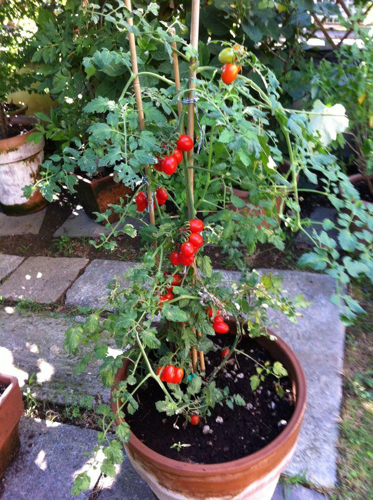 small vegetable garden | Garden | Pinterest