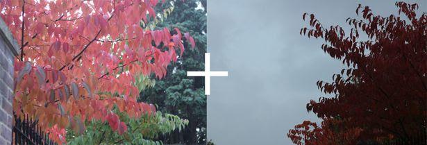 photo autumn20_zpsdcdec011.jpg