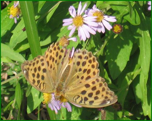 05 butterfly OK