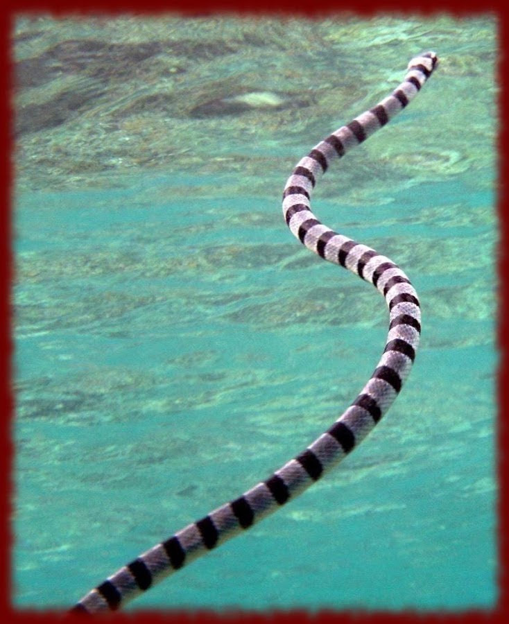Car Signal For Flat Tire, Sea Snakes Wallpapers 1, Car Signal For Flat Tire