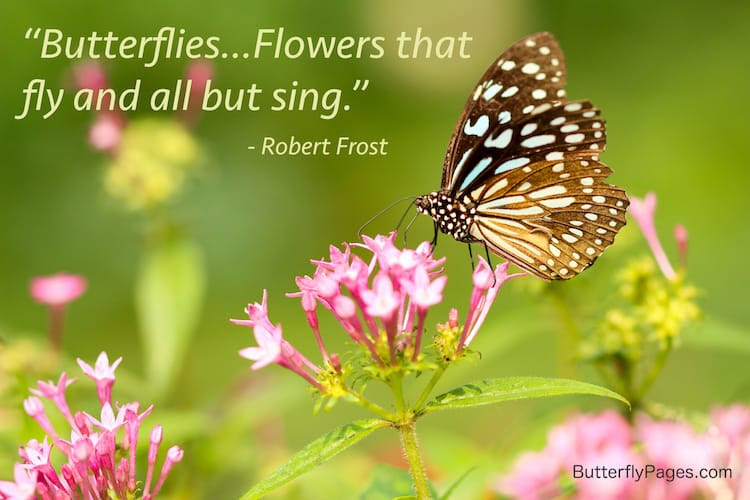 Butterfly Quotes Beautiful Inspiring Quotes Sayings