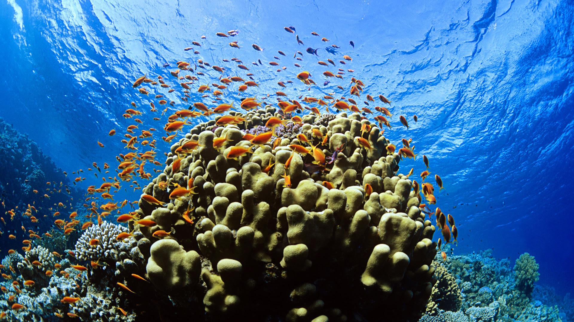 Underwater Sea Fish [1920x1080]