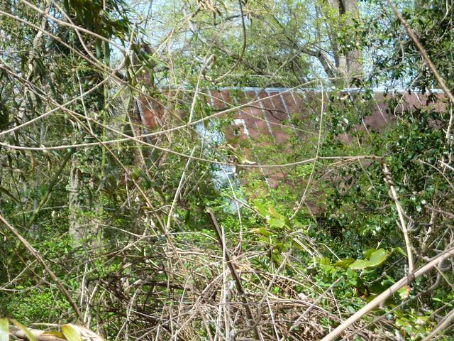 P1180452-2013-04-02-RidgeC-627-Gravel-Driveway-overgrown-metal-roof-chimney
