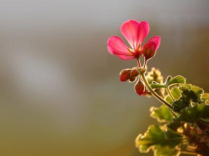 photo wallpaper_flower_in_morning_sun_small.jpg