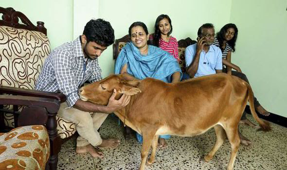 Balakrishnan Nambukudy's family with Manikyam the cow