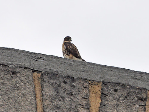 Fledgling on the Crossing Arch