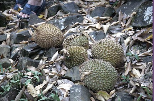 durian_10