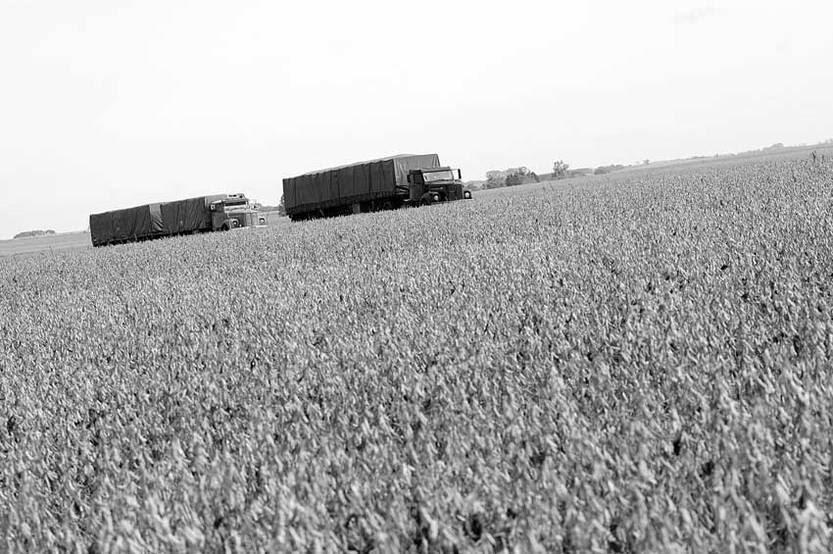 Plantación de soja en la ruta 2, departamento de Soriano. (archivo, abril de 2013)