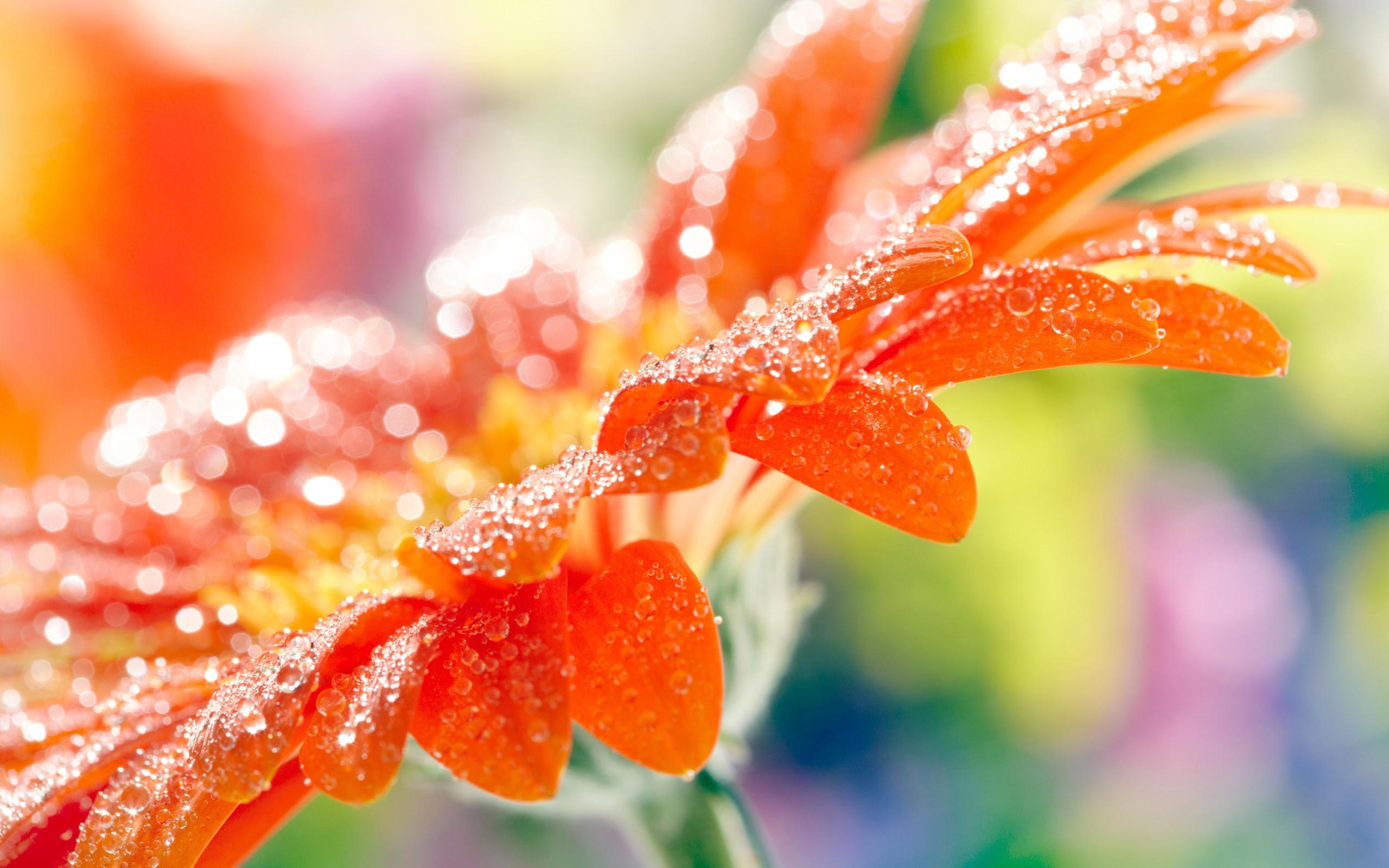 Fantastic Orange Macro Wallpaper 2560x1600 22818